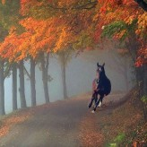 Закон пустоты и цирковая лошадь