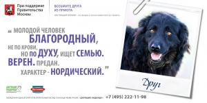 Фонд помощи животным «Дарящие надежду». Пес Друг