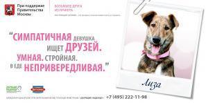 Фонд помощи животным «Дарящие надежду». Собака Лиза