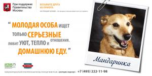 Фонд помощи животным «Дарящие надежду». Собака Мандаринка