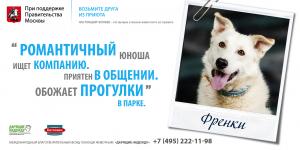 Фонд помощи животным «Дарящие надежду». Пес Френки